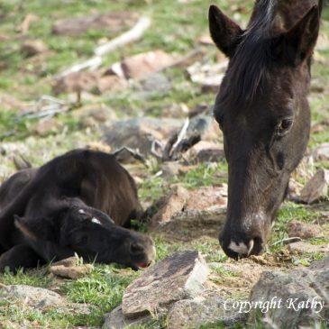 Anti-Premarin – Saving Horses and Educating Women